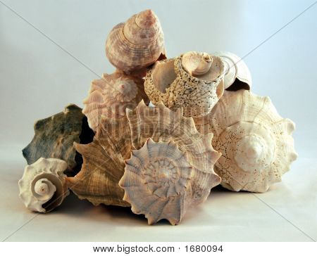 Pile Of Shells