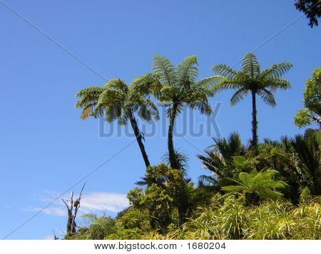 Three Palms Orig