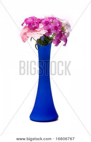 Schöne Blumen (Phlox Drummondi) in blauer Vase auf Studio weißer Hintergrund