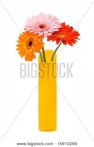 Three gerber flowers in yellow vase on white background