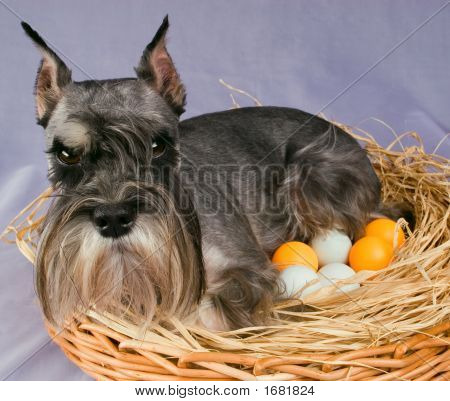 The Dog Hatches Out Eggs