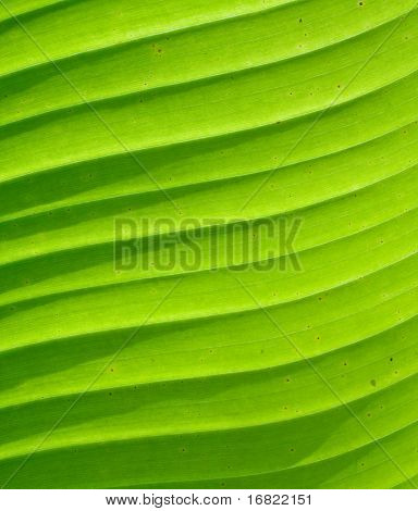green textured palm leaf background