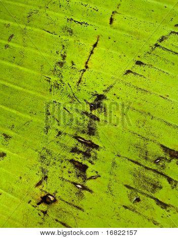 green palm leaf texture  grunge background 02