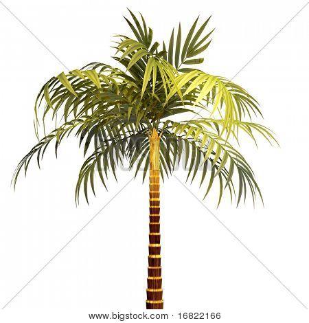 isolierte Baum Plam 3d Hintergrund