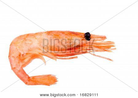 Pink Boiled Shrimp Isolated On White Background