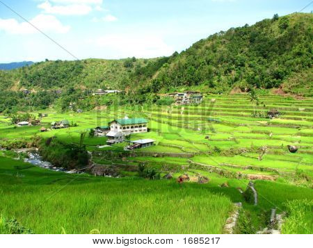 Hapao Village And Rice Terraces