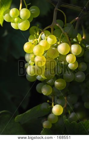 Tasty Grapes And Light