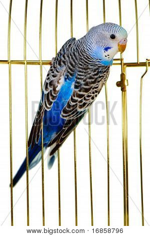 Parrot On A Lattice Cage