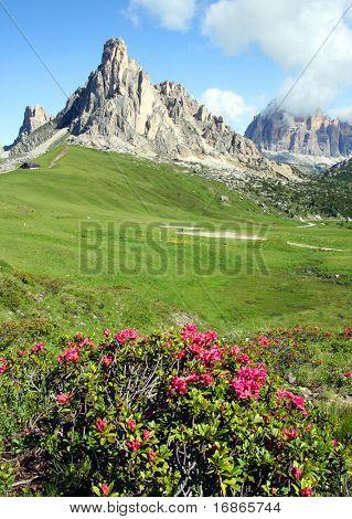 Mountain Azalea in Pass Giau - Italy Europe