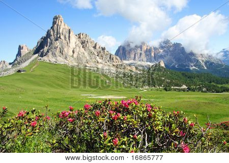 Mountain Azalea in Pass Giau - Italy Europe