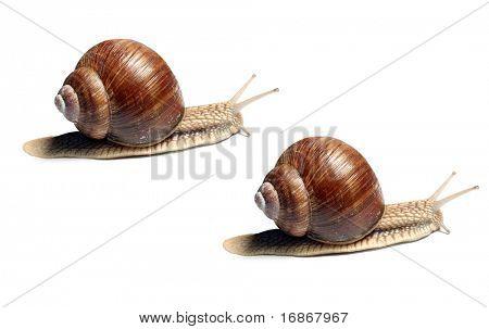 Snails racing - business metaphor