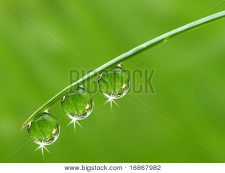 Fresh grass with dew drops - close up