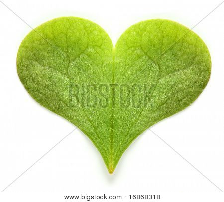 Green hearth - environmental metaphor