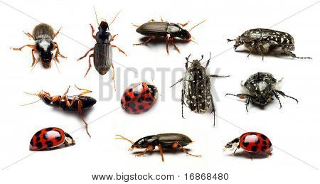 Beetle collection on white background