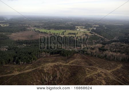 Clearcut Forest,