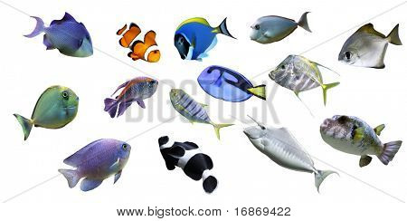 Great sea fish collection isolated on white background