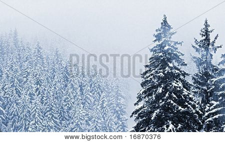 Misty day. Snow-cowered trees in National park Sumava - Czech Republic Europe. Monochrome photography.