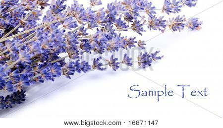 Dry bunch of French lavender