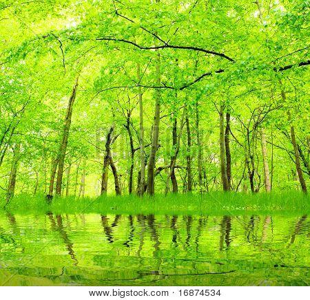 Lake in green hornbeam growth. Beautiful scenery in Bohemian Forest. Czech Republic - Europe