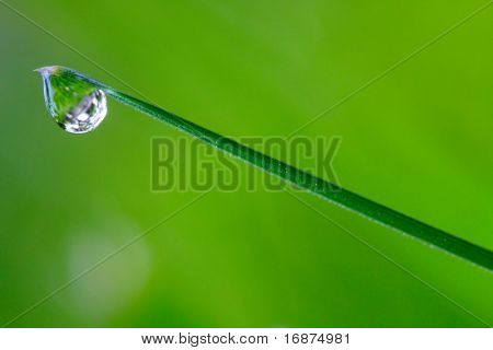 Fresh grass with dew drops - close up. Conceptual image - purity metaphor.