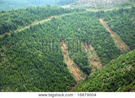 Forest Mudslides