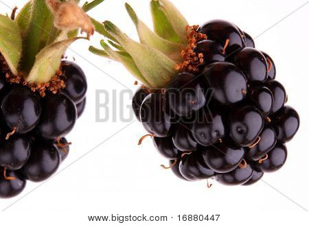 The blackberry (Rubus fruticosus)  is sometimes used in herbal medicine as a treatment for diarrhea and dysentery.