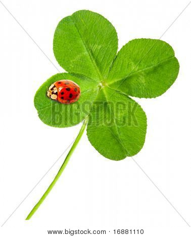 Green quarter-foil with ladybug on a white background.