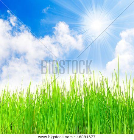 Fresh spring grass.