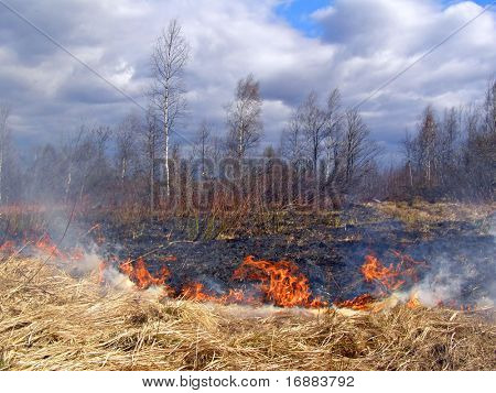 combustion of the herb in wood