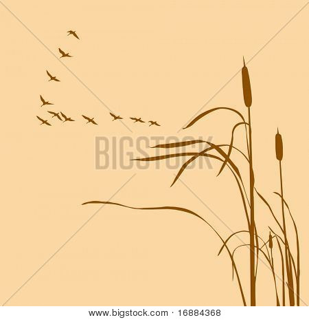 silhouette of the reed in marsh and flock of the geese