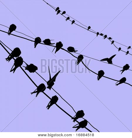 migrating swallows sleep on wire