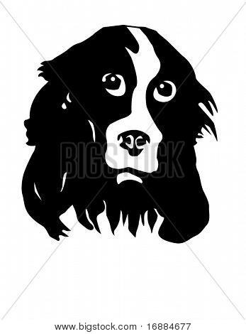 portrait of the dog