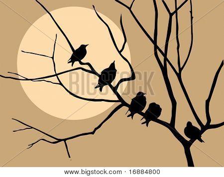 migración starling en el árbol de la rama