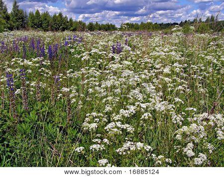 flowerses in field