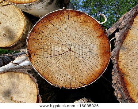 Baum gesägt