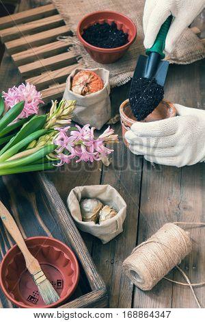 Woman Hands Planting Hyacinth
