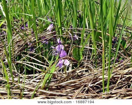 violet flowerses amongst herbs