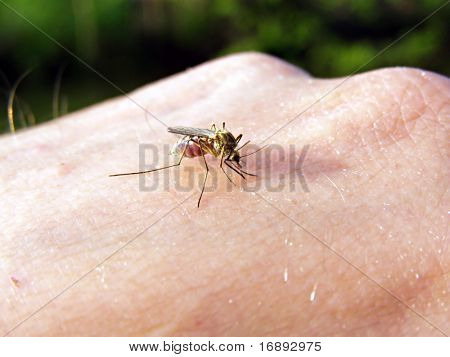 midge on hand of the person