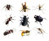 stock photo of gnats  - Insect collection on white background - JPG
