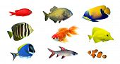 picture of saltwater fish  - Tropical fish  - JPG