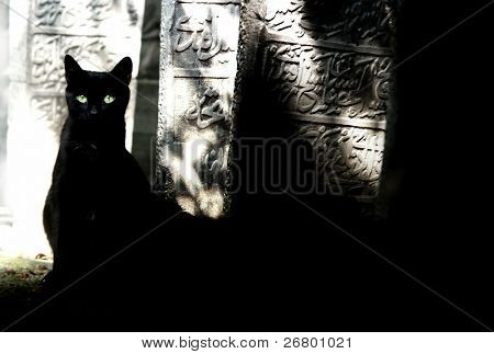 close up shot of a single cat sitting