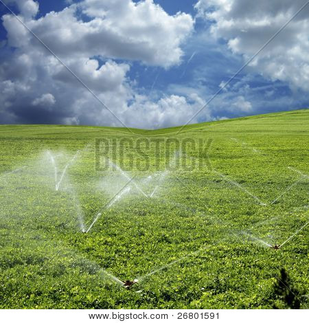 An image of vegetables fields in spring time