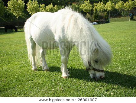 una imagen de un solo caballo blanco
