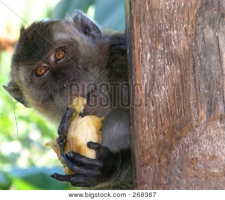 The Monkey's Lunch