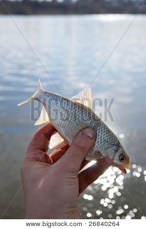 Holding small roach against reflective water surface