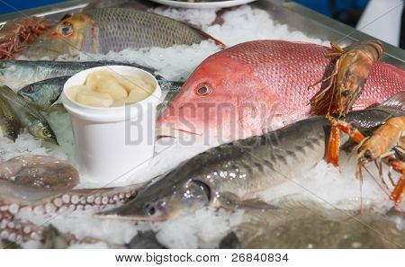 Great variety of fish and seafood on fish market ice display