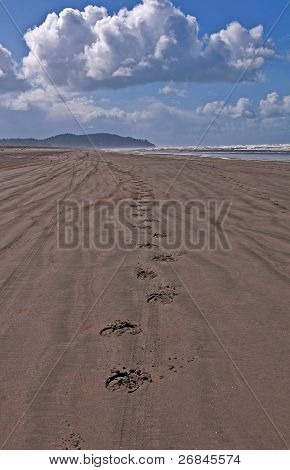 Horse Hoof Tracks On An Empty Beach
