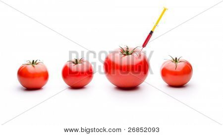 Injecting red liquid in big tomato. Useful for genetic modification concepts.