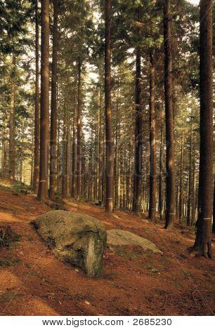 Gwydyr Forest Snowdonia Wales