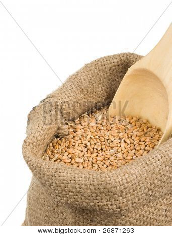 wheat grain in burlap sack isolated on white background